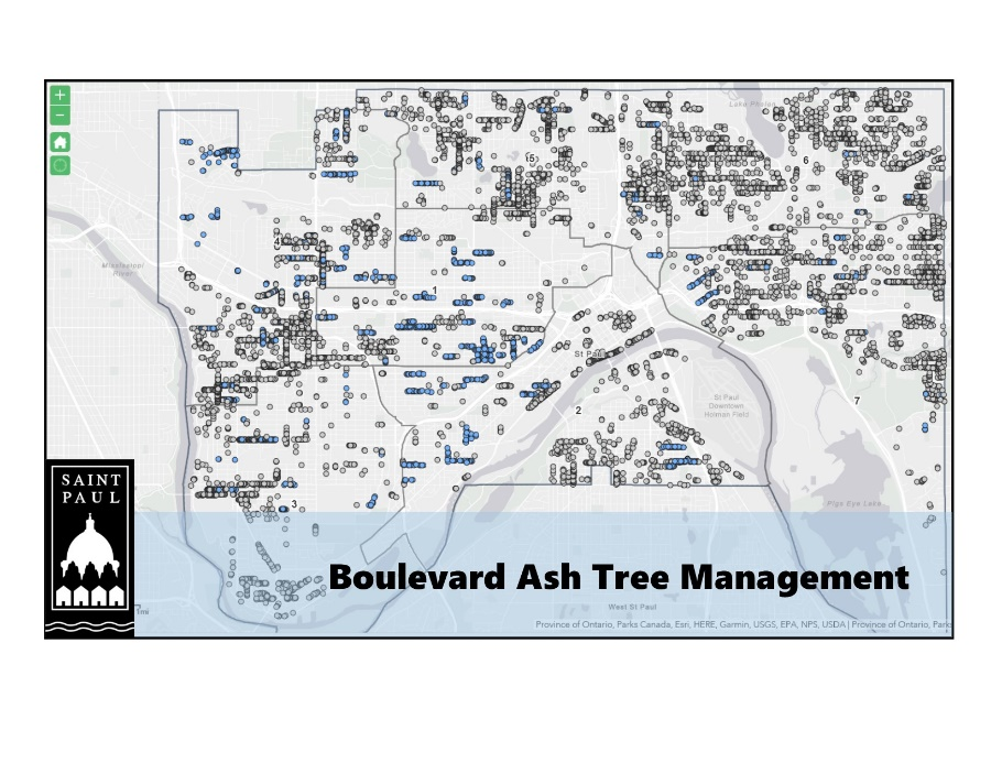 Map of Boulevard Ash Trees in St. Paul