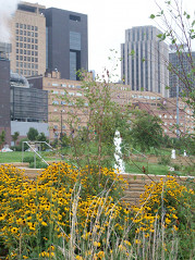 Photo of wildflowers at Harriet Island