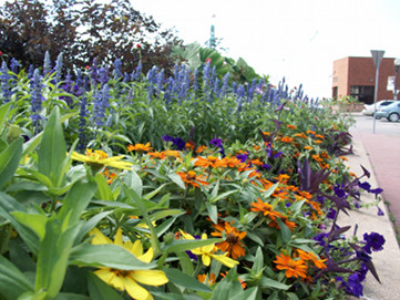 Photo of wildflowers at Riverview park