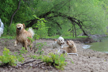 Photo of dogs at Meeker Island Dog Park