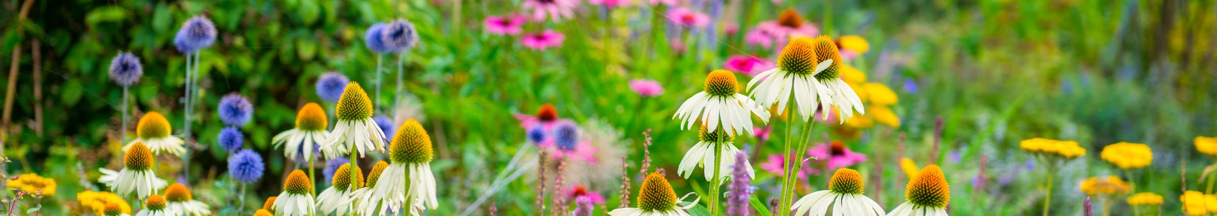 Summer flowers in a field