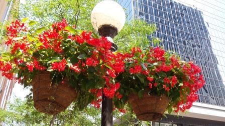 shade basket for site.jpg