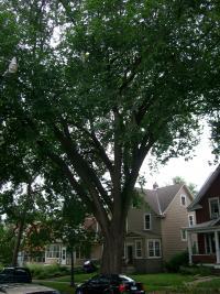 Elm on Dayton Ave