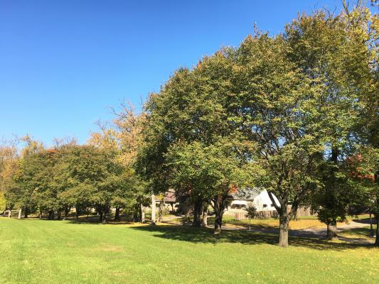 2014 Landmark Tree- Downy Serviceberry