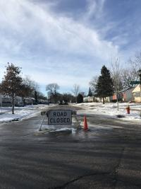 Ash Tree Structured Removal - Closed Street