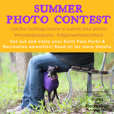 Summer Photo Contest image with title and dog in the park