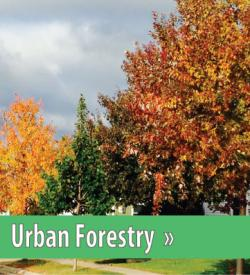 Click to view Forestry Section