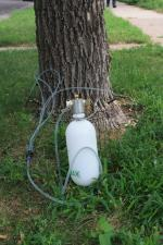 Insecticidal trunk injection for EAB